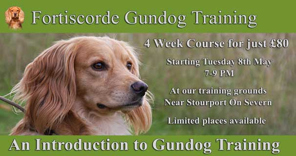 Introduction to Gundog Training