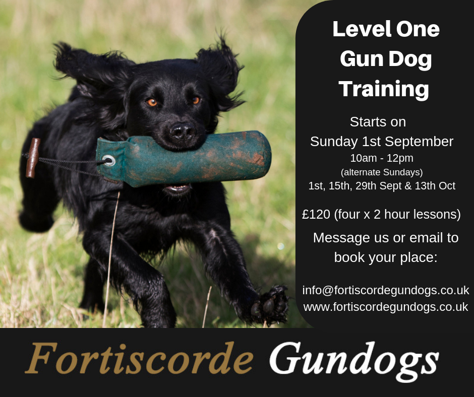 Level One Gundog Training