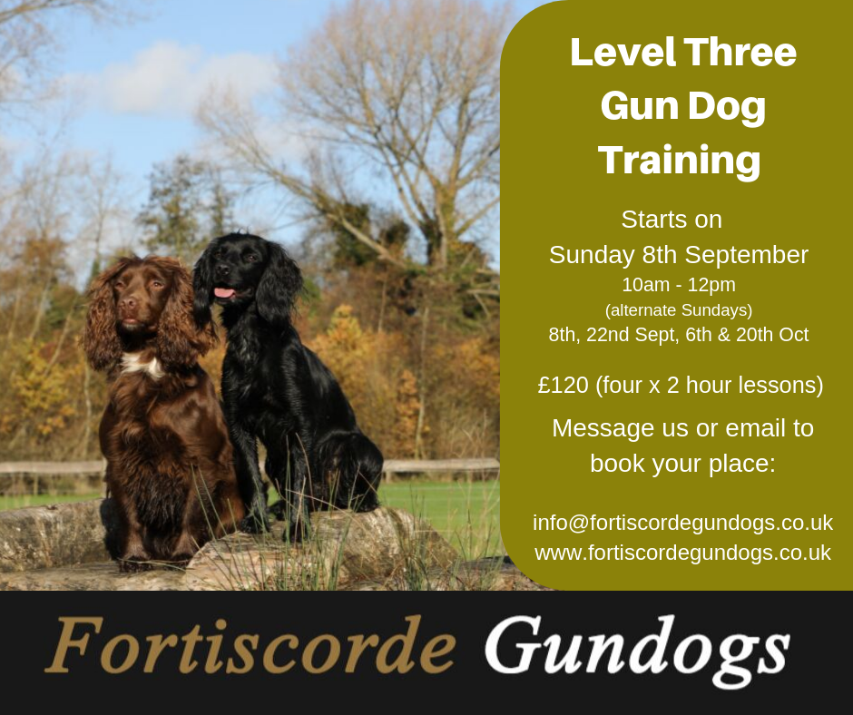 Level Three GunDog Training - Sept 2019