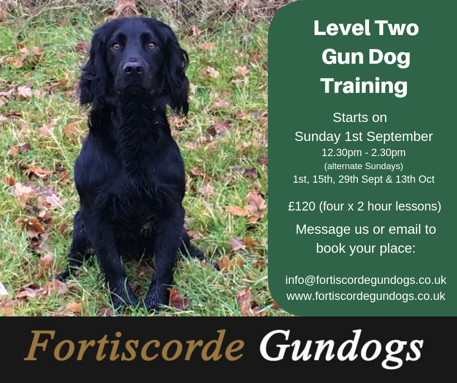 Level Two Gundog Training