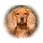 Account avatar for Fortiscorde Gundogs